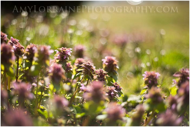 Hello Spring | AmyLorrainePhotography.com